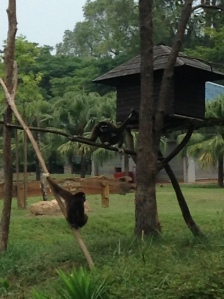 Gibbon island- where the happy gibbons swing in circles at the mini zoo.